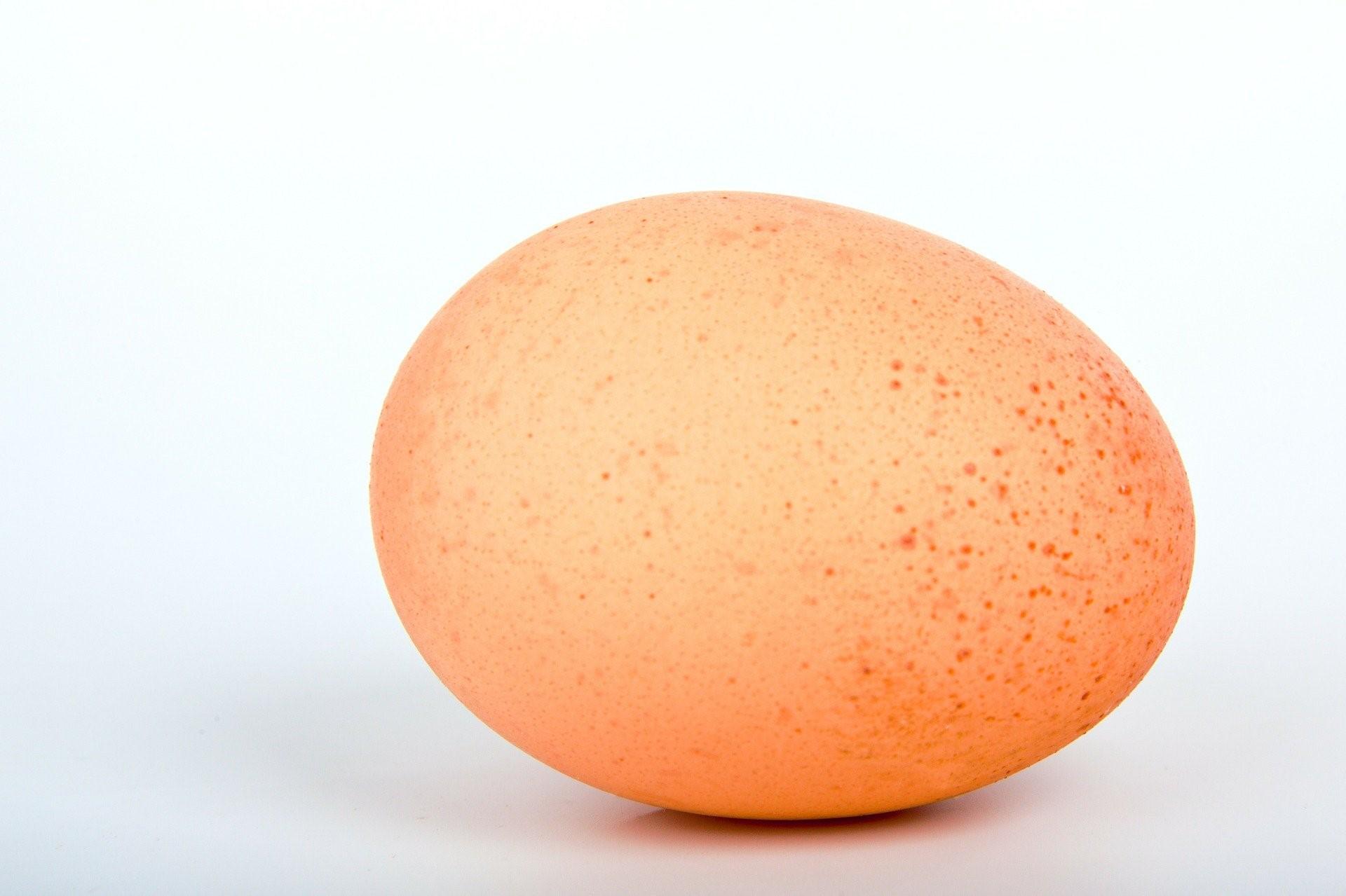 Quid de l'œuf perime