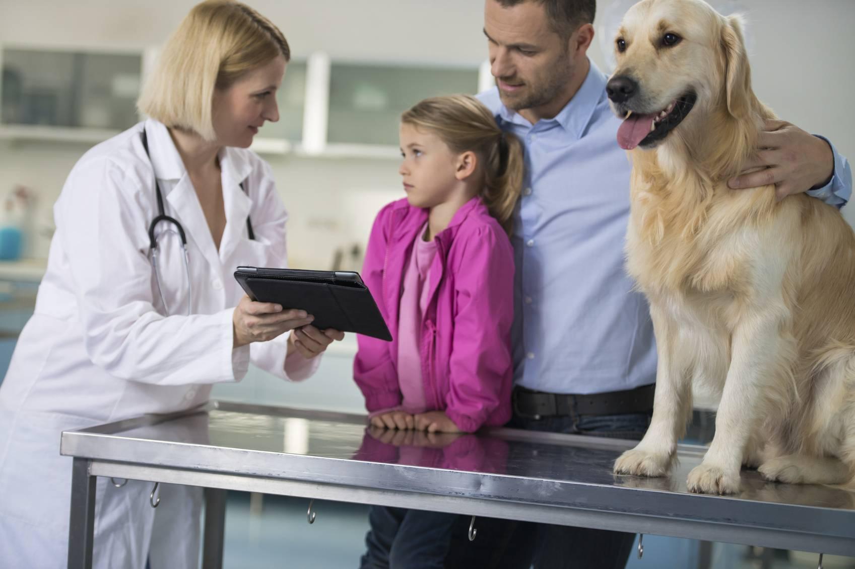 Une assurance pour chien : est-ce que cela faut le coup ?